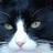 Elegantsand PSN's avatar