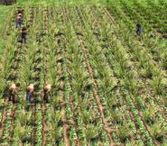FieldScreenshot