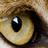 Lexintor's avatar