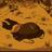 Shortacer123(ARS21TIA)'s avatar