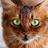Пестрокрылая's avatar