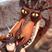 Diablo.'s avatar