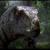 Raptor Gaming 01