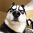 Awesomespongebobfan9000's avatar