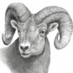 Sir Readslot's avatar