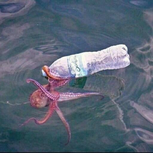 Octopus1210's avatar