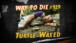 Turtle Waxed.png
