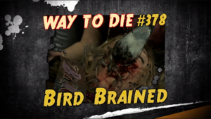 Bird Brained.png