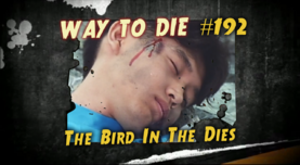 The Bird In The Dies.png