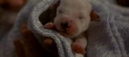 Baby Lucky awake