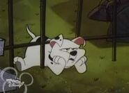 101 Dalmatians Rolly Stuck under tall Fence