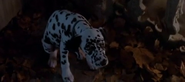 Lucky in 1996 film 2