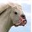 GamingGod333's avatar