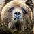 Антимедведь антиклоуга