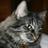 Cerelia710's avatar