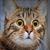 Kitten7979