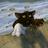 Острые когти's avatar