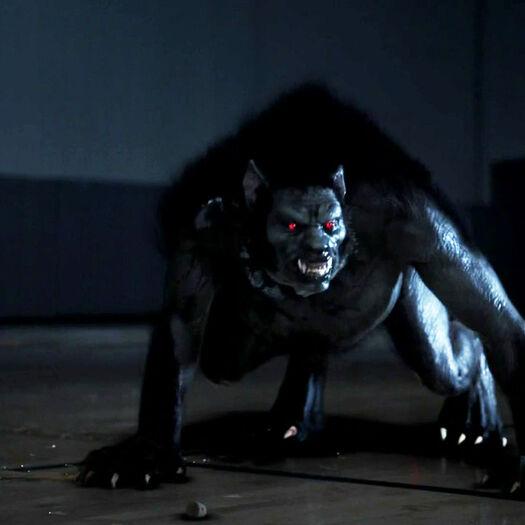 The Alpha Werewolf