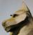 Aquaswan's avatar