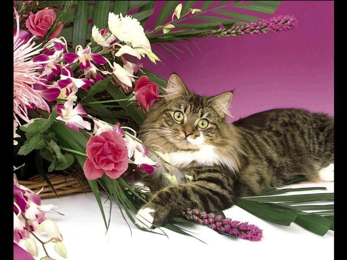 кошка с цветами поздравления фото представить красивый