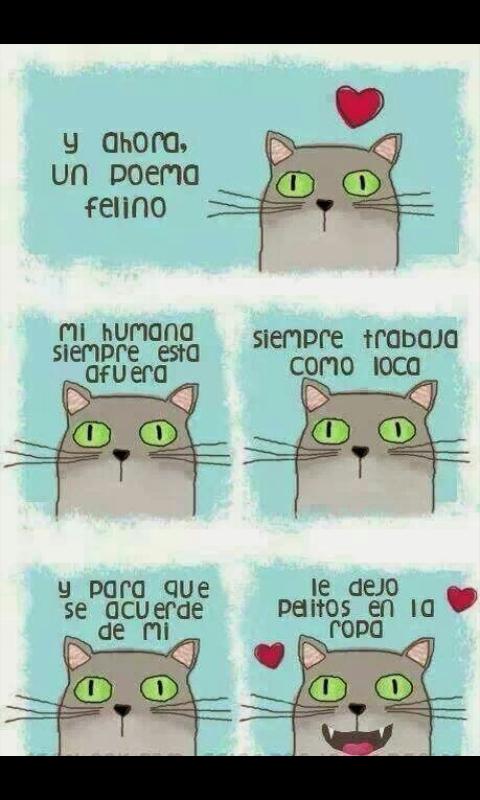 Ahora un poema felino