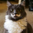 RareRuby's avatar