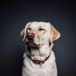 Racism Watchdog