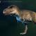 Animalman57's avatar