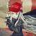 Uselessful's avatar