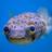 MrBubbles272's avatar