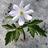 Снежный Цветок's avatar