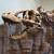Tyrannosaurus Rex2.02456