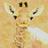 TheFoolontheGrill's avatar