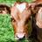 Bessieisback's avatar