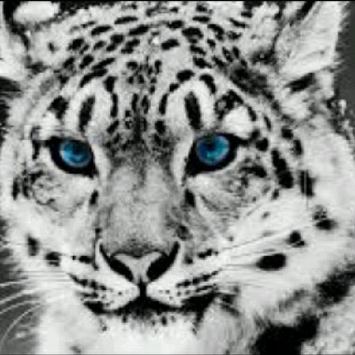 Z Sley's avatar