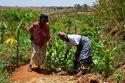 Women smallholder farmers in Kenya