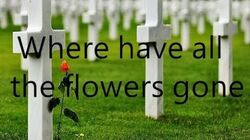 Where_have_all_the_flowers_gone_-The_kingston_trio(lyrics)