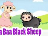 Baa, Baa, Black sheep variations