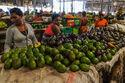 Rwanda avocado