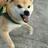 DoggoTheFluffiestBoi's avatar