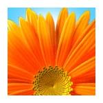 Thegamerplayer71323's avatar