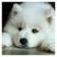 Kailyn1116's avatar