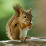 SoapyCranberries's avatar