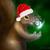 Magicasquirrel