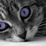 Oakstar519's avatar