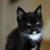 Abi The Cat