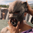 Bluetiger958's avatar