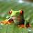Ya Boi King Kai's avatar