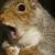 Imamadsquirrel111