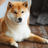 Shibooo1's avatar